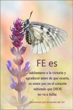 Gods Love Quotes, Good Day Quotes, Quotes About God, Positive Phrases, Motivational Phrases, God Prayer, Prayer Quotes, Spanish Prayers, Spanish Inspirational Quotes