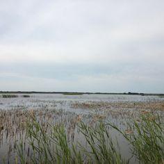 08/31 birdland ...