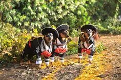 Beverly Hills Chihuahua 3, Viva La Fiesta Movie Review - Divine ...
