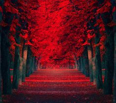 red in nature   see also nature wallpaper nature wallpaper nature wallpaper nature ...