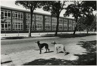 Paets van Troostwijkstraat in Den Haag. Ja hoor, dit was mijn MULO! Het gebouw staat er nog steeds en heeft nog steeds een schoolfunctie!