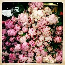 flower stalls paris - Google Search
