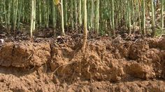 La fertilité du sol de définit comme la facilité d'un sol à produire des plantes. OU la quantité optimale d'éléments nutritifs dans le sol