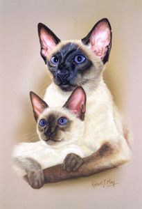 Siamese Cat & Kitten Print