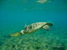 Tartarugas podem ser vistas na Baía do Sueste e na praia próxima ao Porto.
