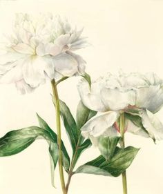 Elaine Searle BOTANICALS