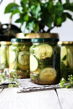If you don't want to pay too much attention to what you are eating, try this easy cucumber diet. Cucumber Canning, Quick Pickled Cucumbers, Pickling Cucumbers, Cucumber Juice, Cucumber Salad, Best Diet Foods, Best Diets, Whole Food Diet, Whole Food Recipes