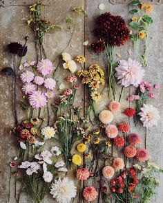 Shortening summer days pick of the week from the field. On the first day of September and there is a tapestry of colour and texture waiting… Flower Farm, My Flower, September Wallpaper, Flower Aesthetic, Dried Flowers, Planting Flowers, Floral Arrangements, Beautiful Flowers, Wedding Flowers