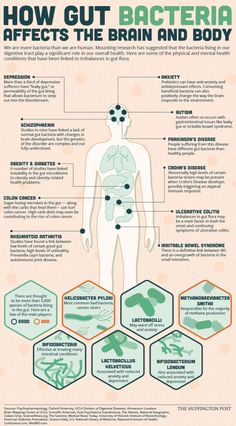 How Gut Bacteria Affects The Brain And Body [Infographic