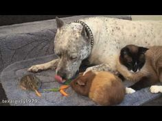 The sweetest dog! :: via {Tails} Pet Media Group :: Dog, rabbit, guinea pig, cat