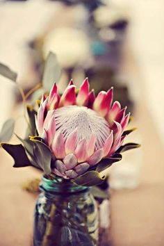 Wedding Flowers I love Proteas! Real Wedding: Lindsay and Rob's Maui Destination Wedding - Lindsay and Rob always knew Maui would be the perfect place to get married so they could include their bi-coastal family in the celebrations. Protea Wedding, Floral Wedding, Wedding Bouquets, Wedding Flowers, Protea Art, Protea Flower, Happy Flowers, Beautiful Flowers, Hawaii Wedding