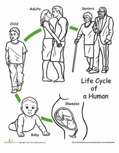 First Grade Animals Life Science Worksheets: Color the Life Cycle: Human