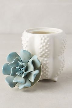 Succulent Candle #anthropologie
