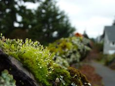 Favorite Mossy Tree 3