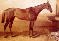 """Kincsem (Hungarian pronunciation: [ˈkintʃɛm]; Hungarian for """"My Precious"""" or """"My Treasure""""; 1874–1887) was the most successful Thoroughbred race horse ever, having won 55 races for 55 starts. Foaled in Kisbér, Hungary in 1874, she is a national icon, and is revered in other parts of the world, too. Over four seasons she won all her races against both female and male company at various race tracks across Europe, a record still unbeaten."""