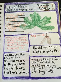 Once a Month Nature Journal Project - Draw Parts. I drew the leaf and the maple key instead of the complete tree. Plant Science, Earth Science, Science And Nature, Tree Study, Study Board, Nature Study, Nature Journal, Road Trip Usa, School Projects