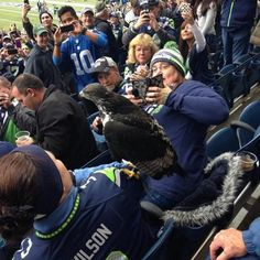 Taima the Augur hawk didn't feel like following his usual flight around the stadium before today's Giants-Seahawks game. He took a detour and landed on a Seahawks fan, because he's a hawk and can do whatever he wants. Taima could have picked a closer seat for the game, though. LOL