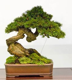 Bonsai Tree, can maybe stand in the boardroom. The tree grows as 4i grows as a new branded, large company.