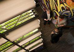 C'est au New-Jersey, à proximité de New-York, que va bientôt ouvrir le plus grand site de production agricole verticale au monde. Prenant place dans une usine abandonnée, deux tiers du bâtiment seront exclusivement dédiés à la culture de choux et de salades, tandis que le dernier tiers abritera un centre de recherche, des bureaux et un café, créant ainsi 78 emplois - Publié le 20 septembre 2015