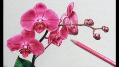 Orchid Flower Drawing Tutorial by DArt