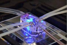 Chips podem substituir animais em experimentos científicos