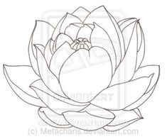 Lotus Tattoo by Metacharis on DeviantArt
