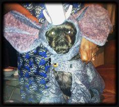 Dog Halloween Costume Contest: Elephant