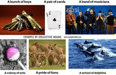 Examples of Collective Nouns Simple English lessons