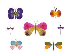Flower Petal Butterfly Collection - Heather B. Marshall
