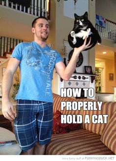 Hold A Cat ~ sweetie, I think you can do this!