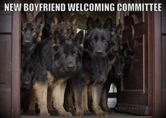 GSD approval required before dating my daughter. BTW, those are Polish German Shepherds--gorgeous!