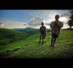 Young shepherds above the tea fields in Bururi Province, Burundi.