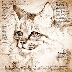 """Maine Coon Face"" Detail of a Da Vinci style drawing"