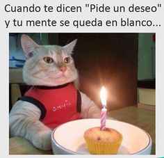 37 ideas for memes divertidos de gatos I Love Cats, Crazy Cats, Cool Cats, Funny Cats, Funny Animals, Cute Animals, Animal Memes, Cat Birthday, Happy Birthday Me