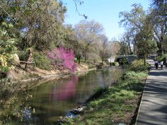 UC Davis Arboretum ... the bright magenta color comes from a Redbud (blooms in early spring)