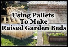 Using Pallets To Make Raised Garden Beds Growing a garden in raised beds has many benefits but can sometimes be a little costly depending on what you build them out of. I'm all about being frugal and using what I have or what I can get cheap or free for my homestead projects, and pallets seem to be one of those things that just seem to be easy to get for free. I love having free lumber but there are a few things you want to consider before using pallets for your proje