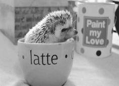 hedgehog latte -morning for Richard H. hahahaha