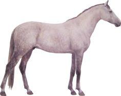 L'Iomud - Turkménistan - Cheval de selle