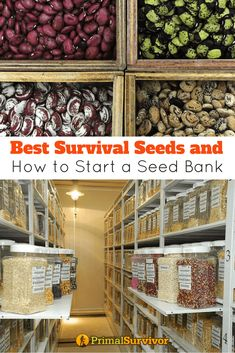 """In addition to stockpiling emergency food, many preppers are seriously looking at starting a seed bank. The idea is that you will be able to grow food for your family, even in the worst circumstances and when the supermarket shelves are empty.There are a lot of """"survival seed"""" kits available – but don't rush off and buy one until you read this first. #survivalseeds #heirloomseeds #seedbank #survivalfood #primalsurvivor"""
