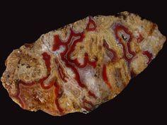 Czech Agate- 104x52mm(http://www.mineraltivadar.hu/)