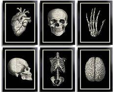 Anatomical Poster Set Anatomy Print Set of 6 Medical Wall Art Skull Art Prints Gifts for Boyfriend Set of Posters Vintage Anatomy Skull 110