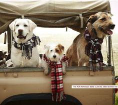 Preppy winter dogs; family portrait; dog portrait; lands end
