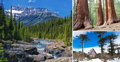 Los+7+bosques+más+bellos+del+mundo