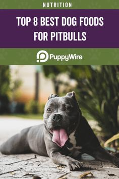 Want the best dog food for Pitbulls? Check out our top 8 picks that range from Pitbull puppies, seniors, and adults. It also covers skin allergies, building muscles and more. Best Dog Food, Best Dogs, Food Allergies, Build Muscle, Muscles, Dog Food Recipes, Pitbulls, Nutrition, Range