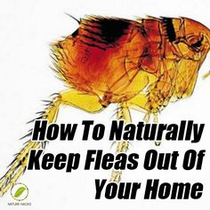 How To Naturally Keep Fleas Out Of Your Home