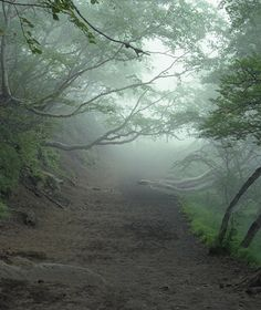 World's Most Haunted Forests: Aokigahara