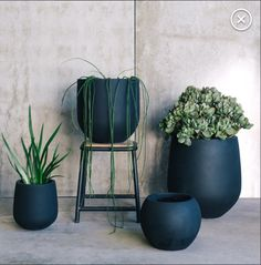 succulents and house plants in dark pots. The use of rich colors for the planters gives this a totally different look than if it were terra cotta or white