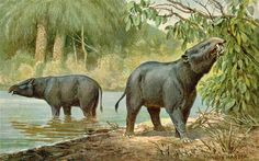 Moeritherium Facts: Moeritherium (Heinrich Harder)