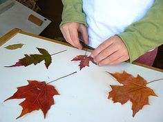 Fall Leaf Puzzles - Pinned by @PediaStaff – Please visit http://ht.ly/63sNt for all (hundreds of) our pediatric therapy pins