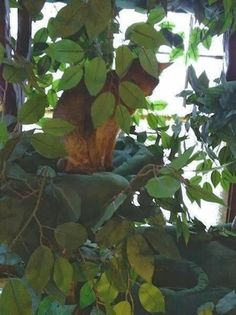 """Isabel"" on her Fantasy Cat Tree"